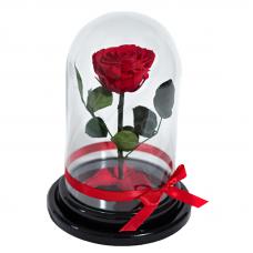 Стабилизированная роза в колбе (красная)